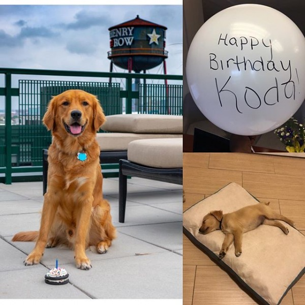 Koda recently celebrated his 1st birthday! You're growing up so fast ❤️ We hope you enjoyed your birthday treat